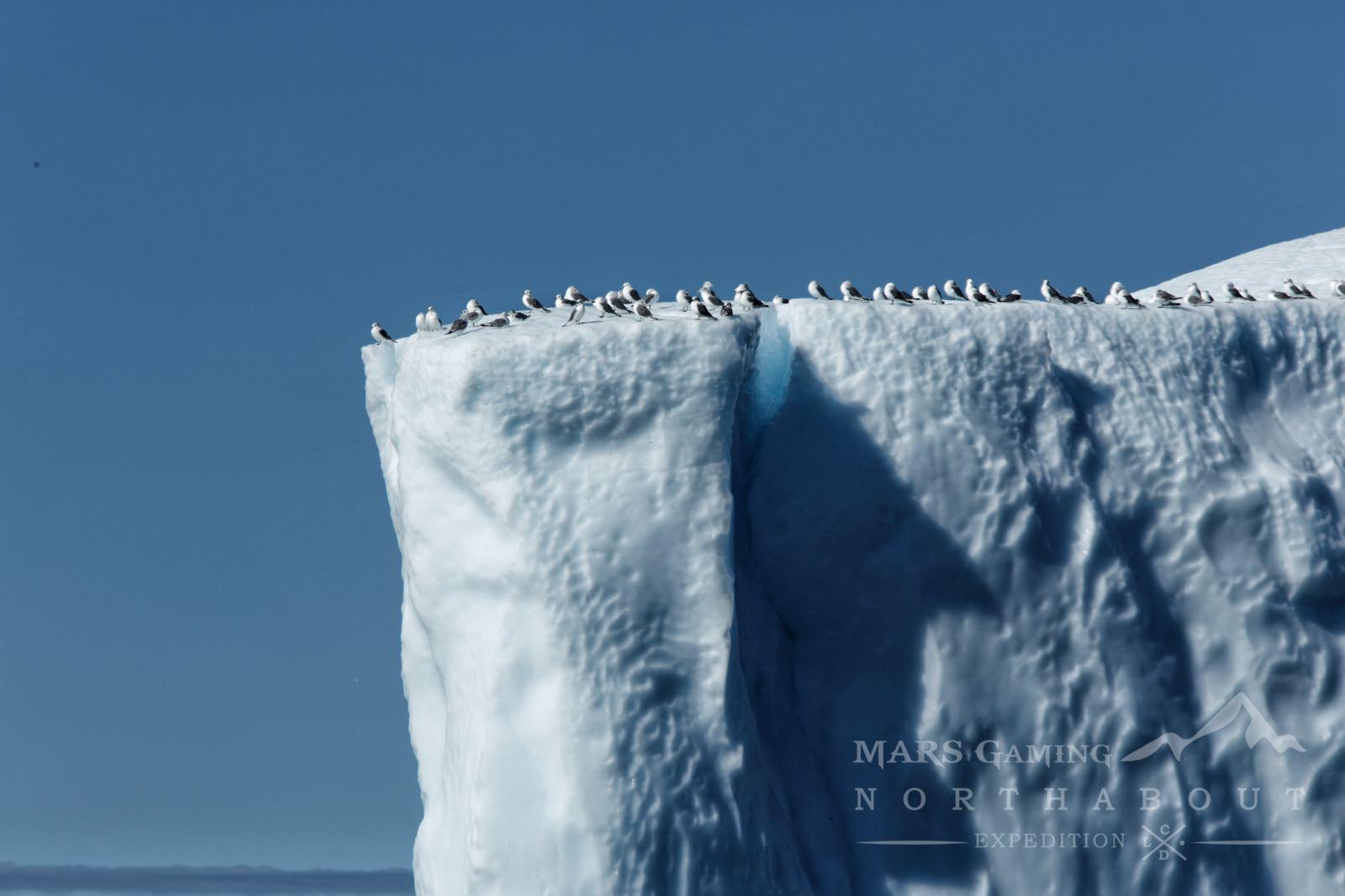 Pájaros sobre iceberg
