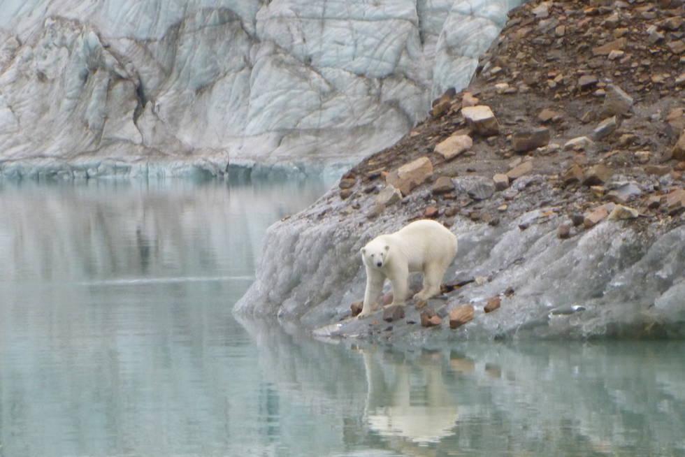 Visita de oso polar al Northabout