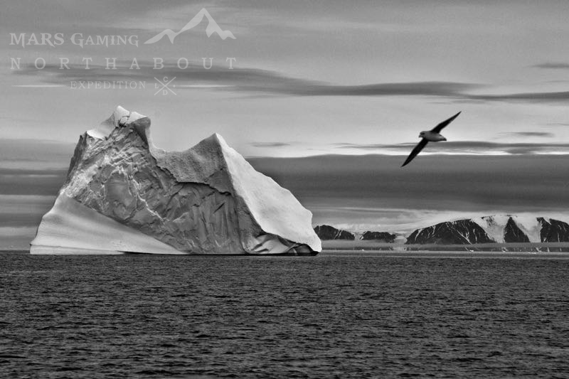 Iceberg y gaviota