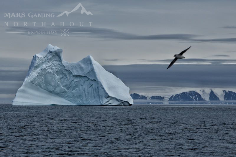 Iceberg and seagull